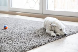 Clean Carpet Regularly: Is it Necessary to Remove Carpet Stains?